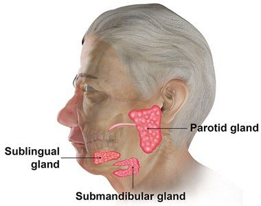 Submandibular Salivary Glands